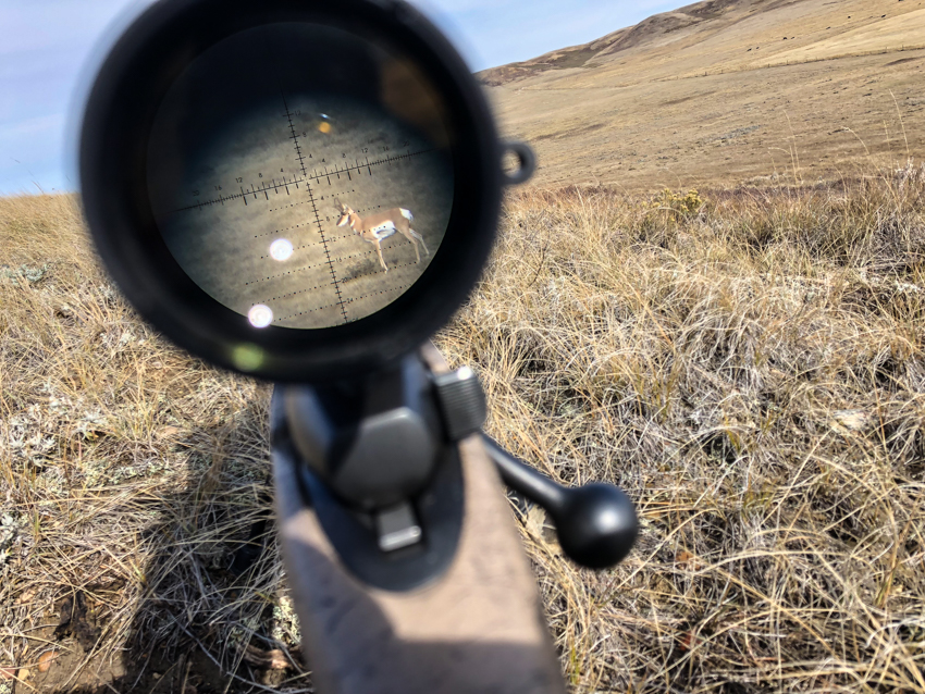 antelope, rifle scope, hunting