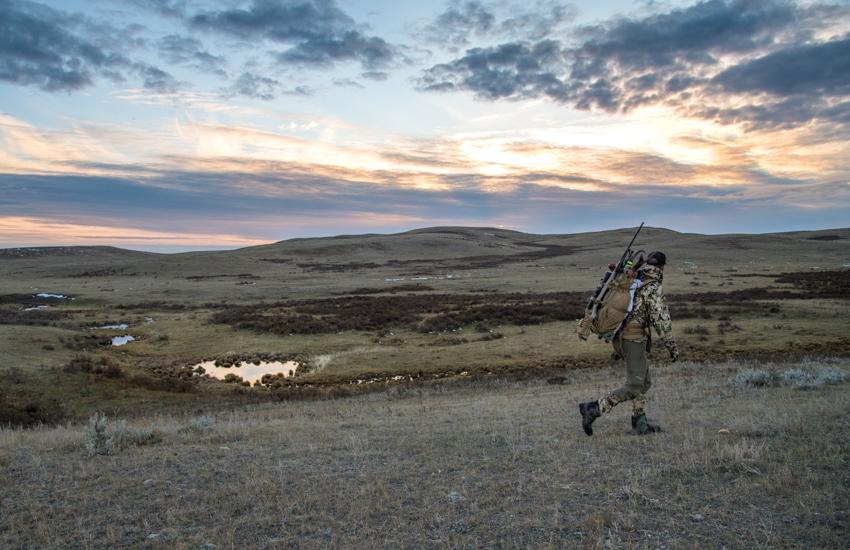 montana, antelope, hunting